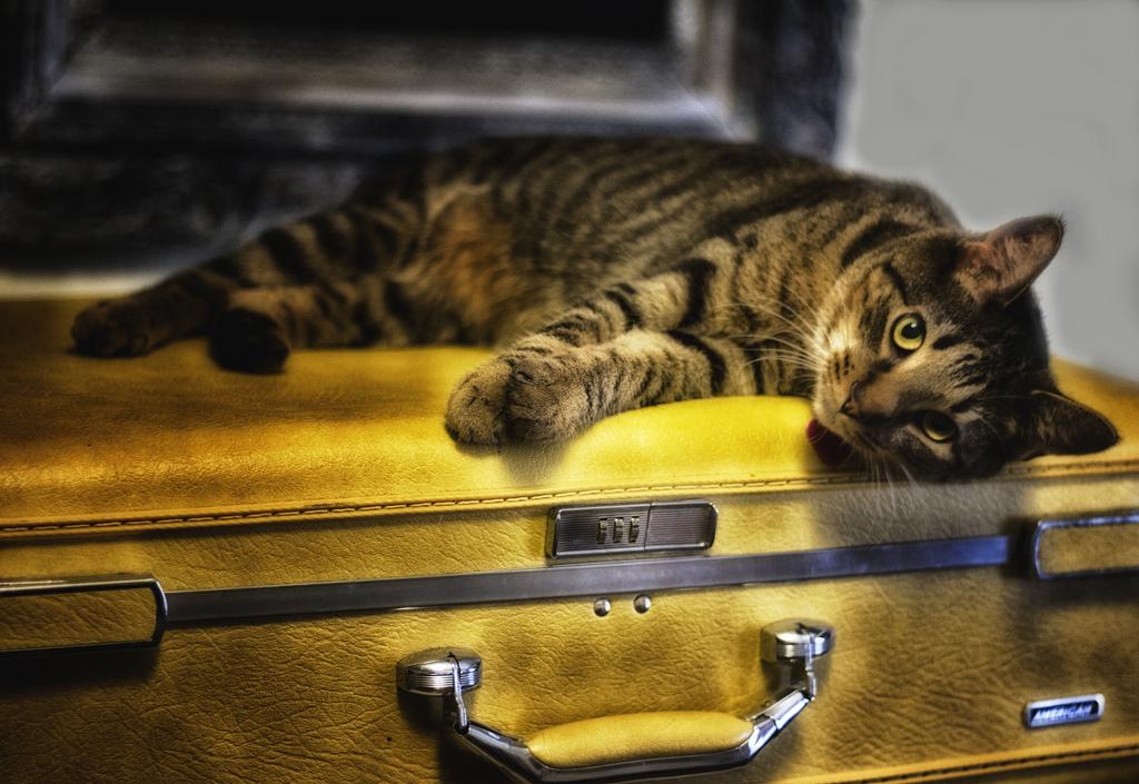 Как выбрать чемодан на колесиках