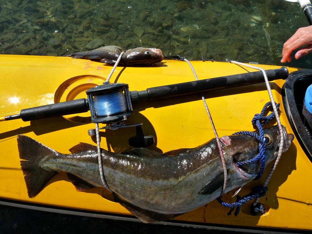 Рыбалка в Норвегии — рай для рыбаков со всего мира