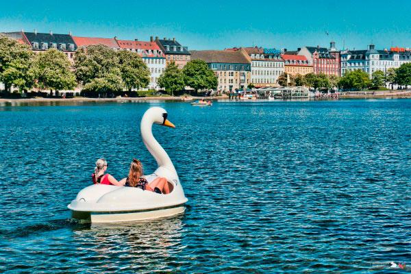 Лодка в виде лебедя.