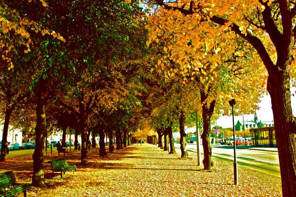 Kungstradgarden парк.